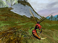 Red Soldier Wasp